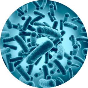 Friendly Bowel Bacteria